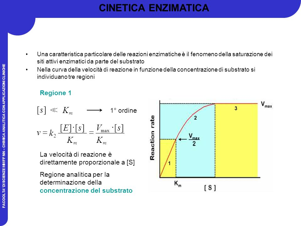 CINETICA ENZIMATICA ] [ s K > ] [ K s E k v × = V Regione 1